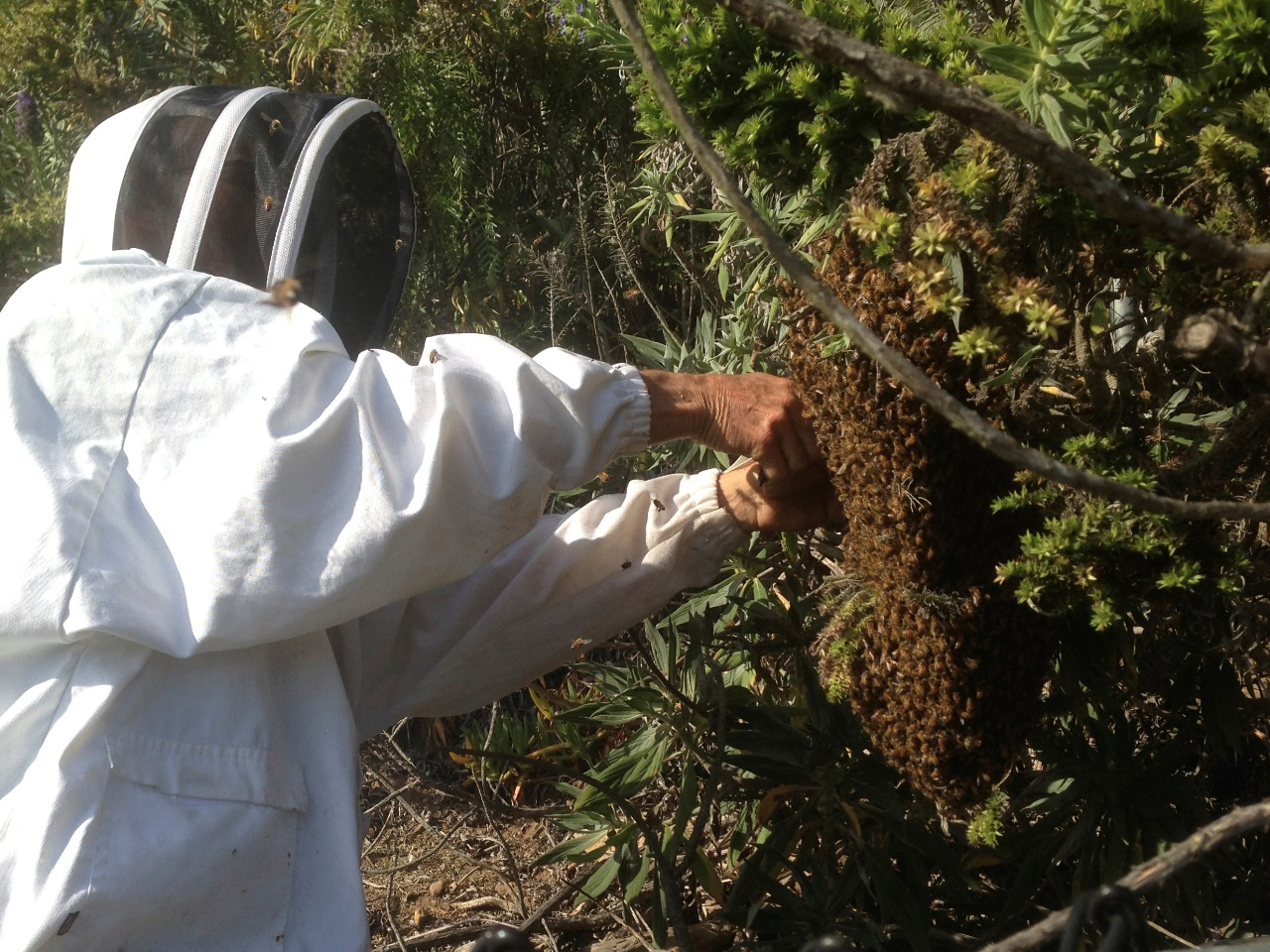 santa_barbara_beekeepers_association_keepers_6