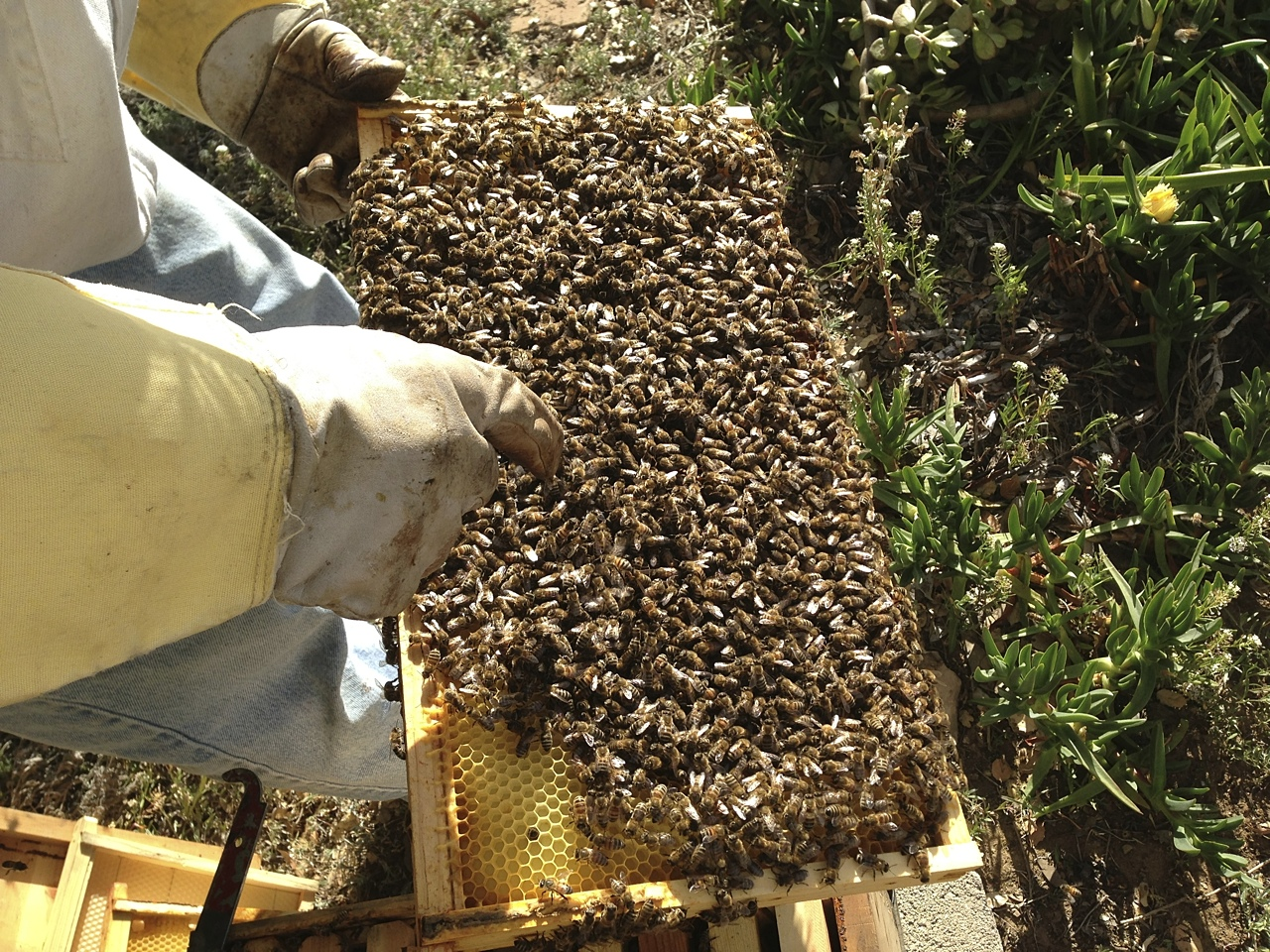 santa_barbara_beekeepers_association_keepers_7